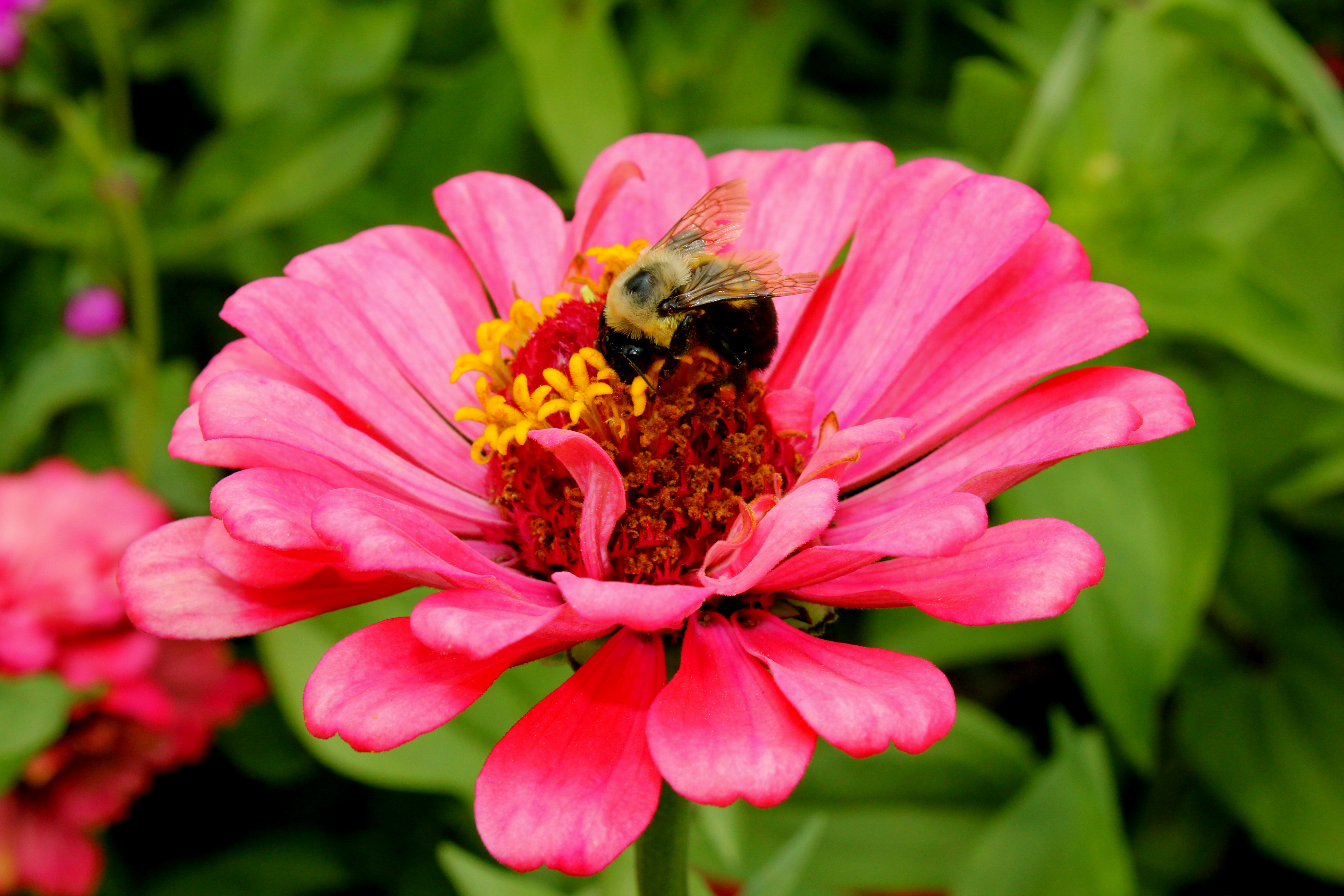 Shape and Color Matters in Pollination! – The Bees Waggle
