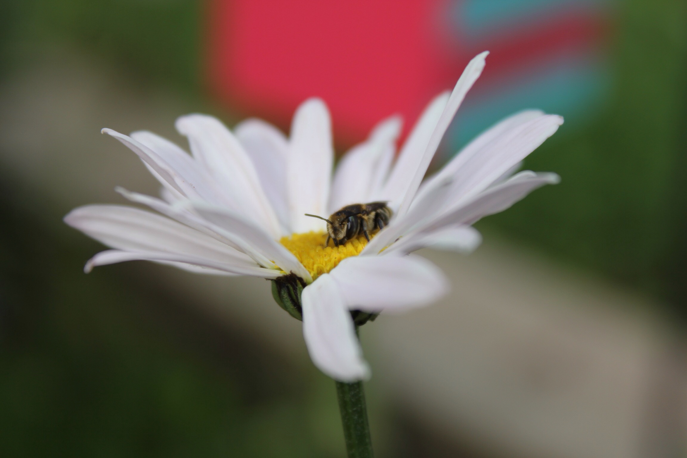 Shape And Color Matters In Pollination The Bees Waggle