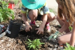 Kailey began showing her buddies how to plant.