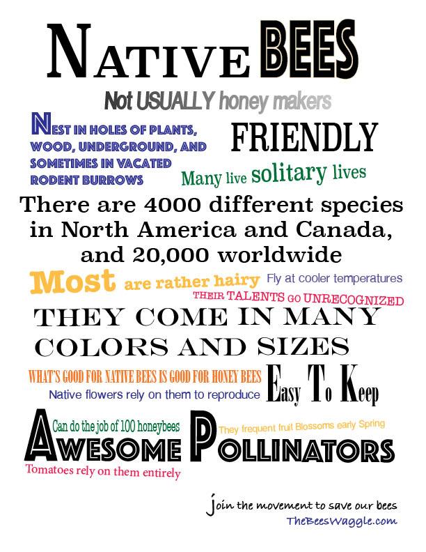 Native Bee flyer