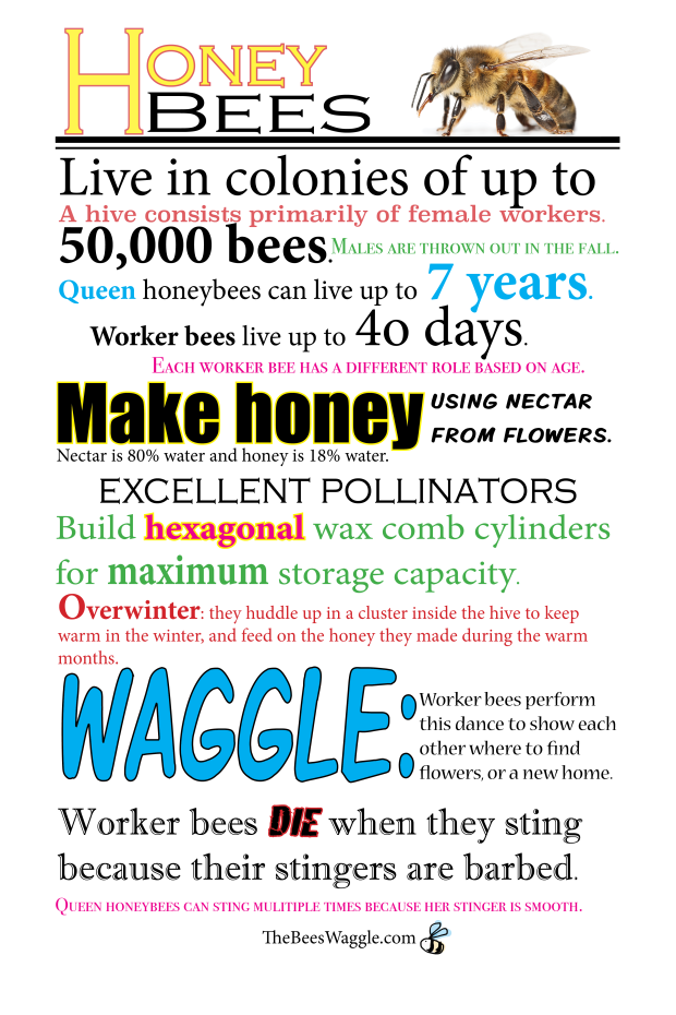 honeybee-fun-facts