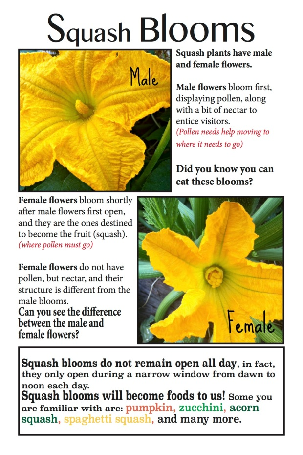 Squash Blooms page