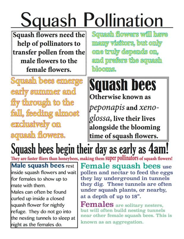 squash pollination