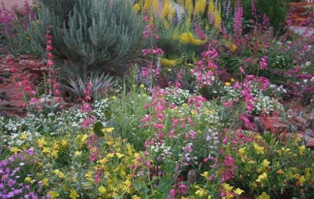 Rockies Audubon Habitat Hero Garden